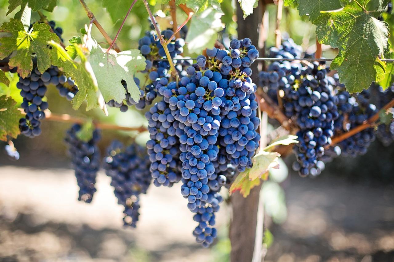 raisin et ses vertus pour la santé